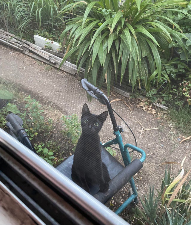 alley cat says hi