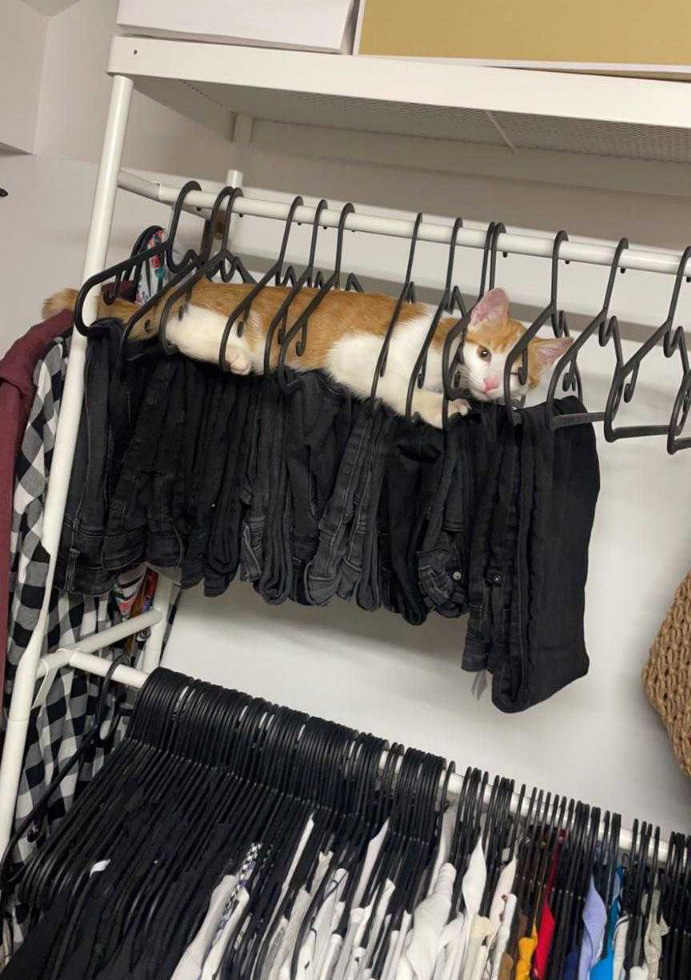 cat on clothes hangers