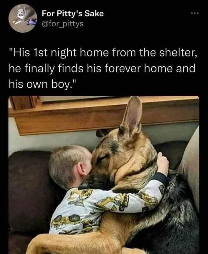 dog boy cuddle first night