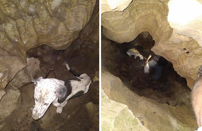 dog rescued from cave
