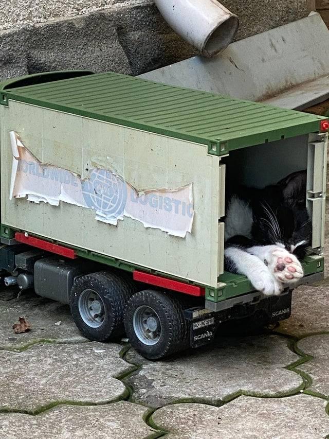cat sleeping in toy truck