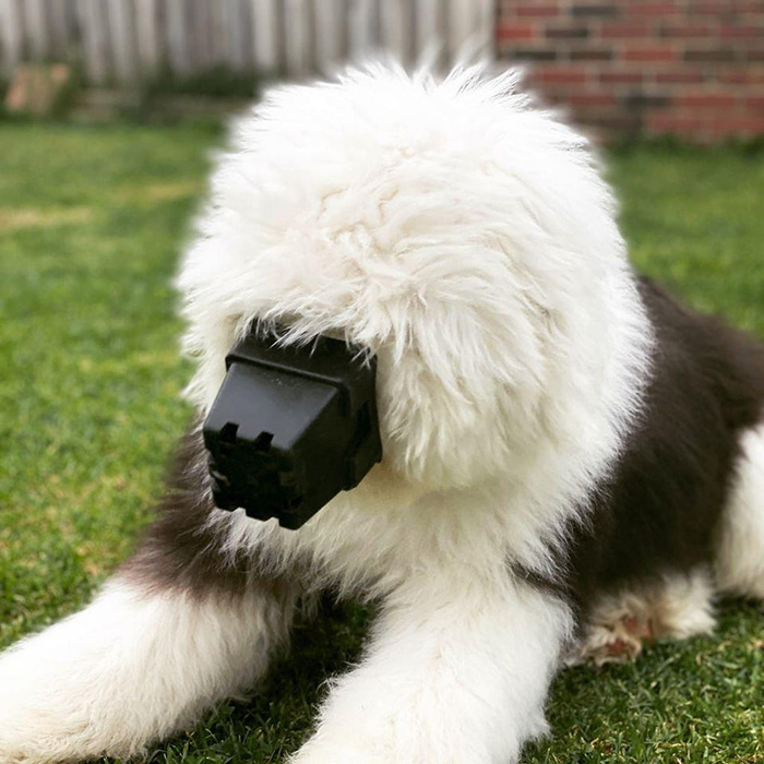 dog funny pic