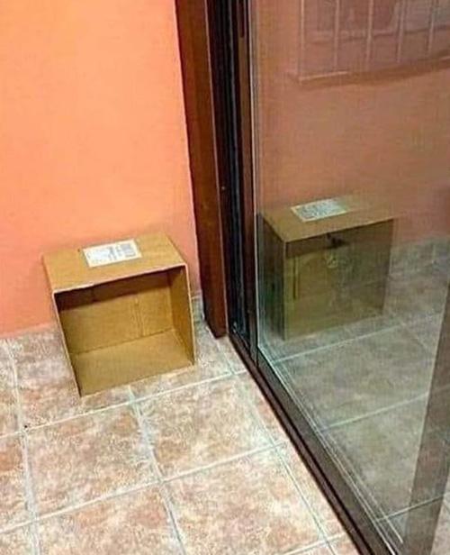 A rare photo of Schrödinger's cat
