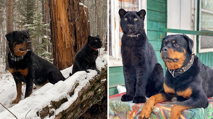 luna black panther