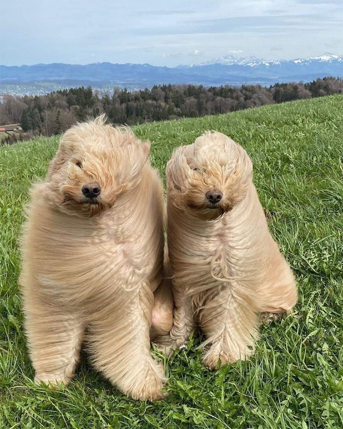 windy dogs